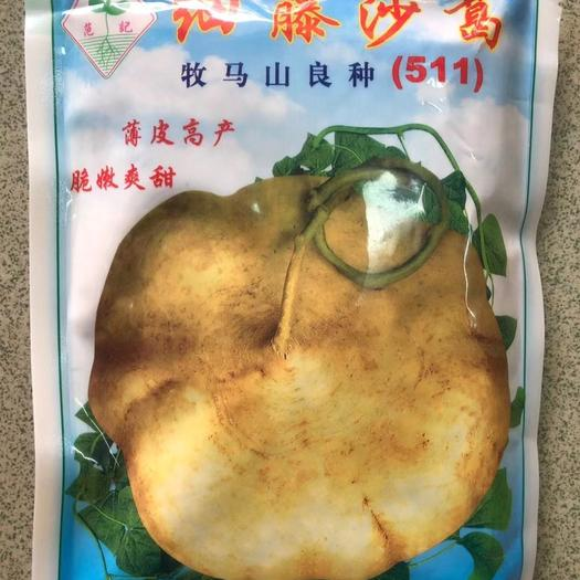 清远英德市凉薯种子 沙葛种子地瓜凉薯番葛葛薯种子四川一枝花细荇沙葛种子平底高产