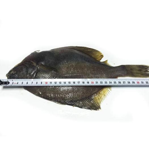 哈尔滨 俄罗斯黄金蝶鱼(左口鱼)(偏口鱼)一手货源正关手续