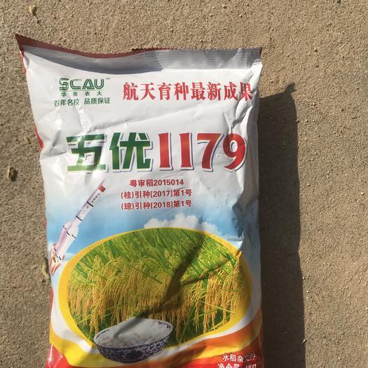 河源龙川县 五优1179水稻种