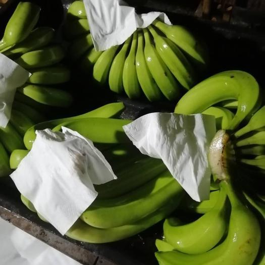 遂溪县 广东湛江遂溪(香蕉 )7成熟度