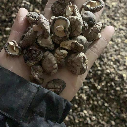 駐馬店泌陽縣 2019香菇菇1.5~2厘米干香菇厚冬菇