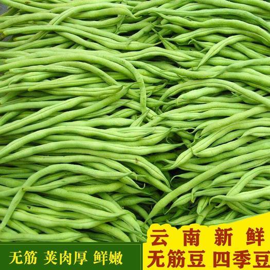 西雙版納勐海縣 【特價包郵】云南農村自種新鮮無筋豆蕓豆四季豆角蔬菜產地現摘