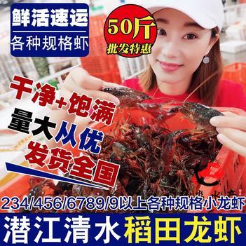 潜江鲜活清水小龙虾30/50斤各种规格红虾青虾批发全国