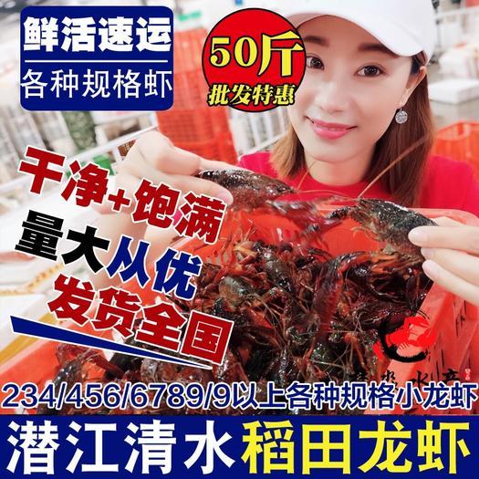 潜江潜江市 潜江鲜活清水小龙虾30/50斤各种规格红虾青虾批发全国