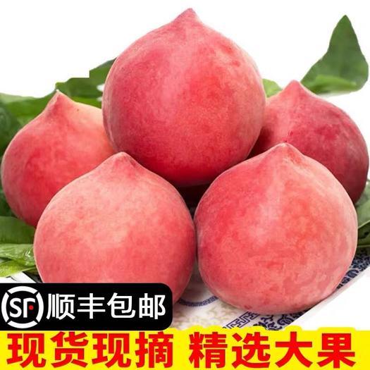 临沂蒙阴县 2020现摘水蜜桃 水果新鲜桃子新鲜脆桃毛桃水果3斤冬桃