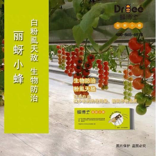 北京 蜂博士丽蚜小蜂 温室大棚 粉虱天敌 生物天敌