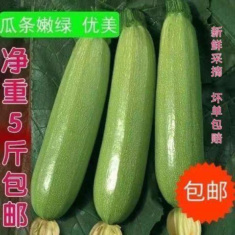 三门峡湖滨区 【特价包邮】农家自种新鲜小南瓜西葫芦嫩蔬菜茭瓜 批发包邮