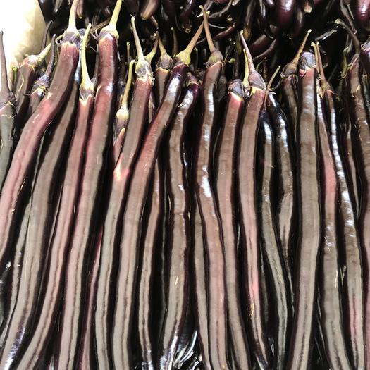 兰陵县 精品黑线茄,红线茄,等各种茄子,大量上市,大量有货