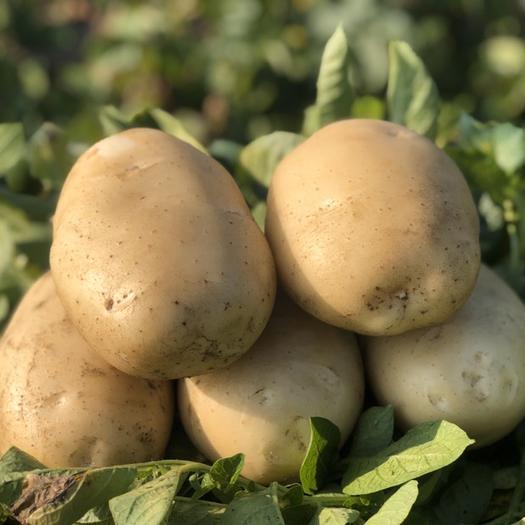 盈江縣 精品新鮮土豆
