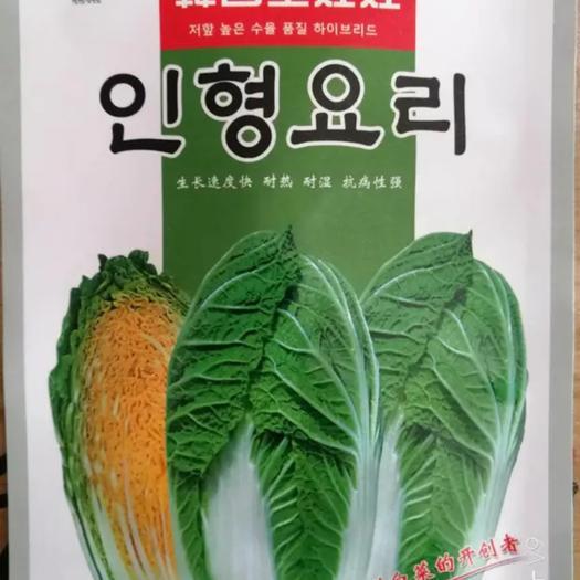 商丘夏邑县 韩国进口 金娃娃 娃娃菜种子10g 亩用8袋 45天