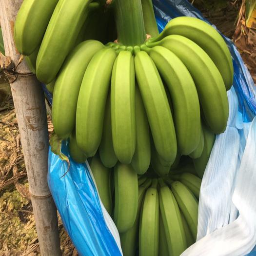 惠州 广东本地香蕉近期大量批发