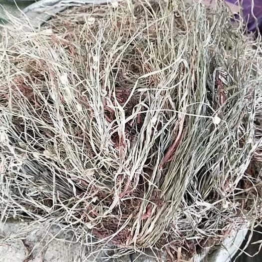 玉林中藥材青蒿 中藥材水蜈蚣  三莢草  一箭球 寒氣草