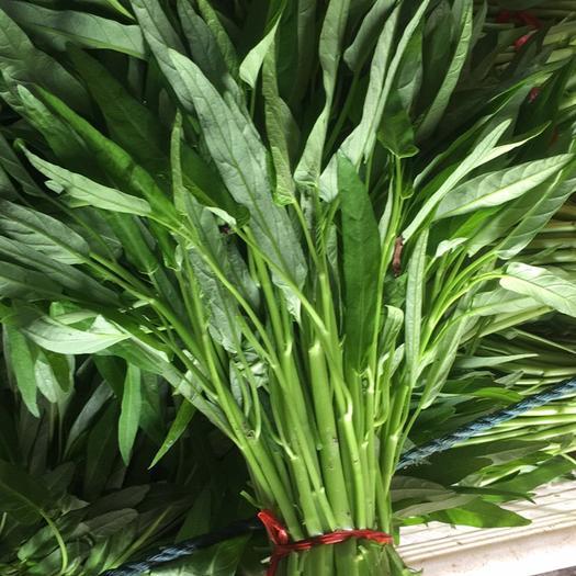 漳州龙海市柳叶空心菜 40 ~ 45cm