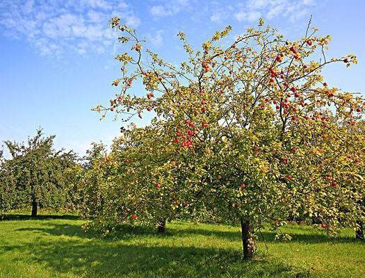 杭州咨询服务 指导各种经济类果树的栽培