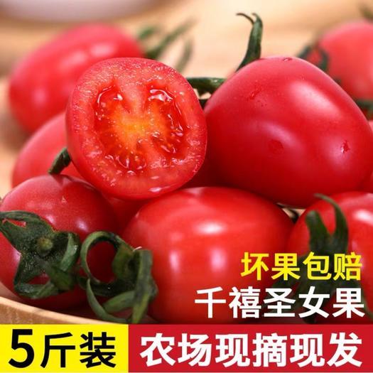 聊城莘县 千禧圣女果 小番茄小柿子 产地直供 对接各大商超支持一件代发