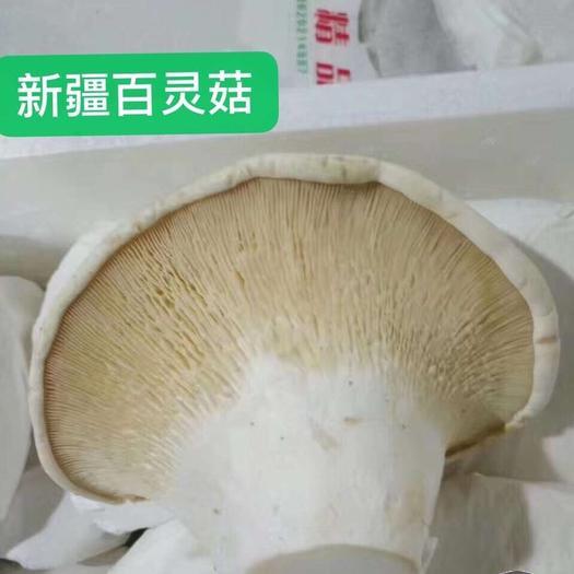 广州白云区白灵菇 舌尖上的美味~百灵菇,产自美丽的新疆天山,是难得的优选食材!