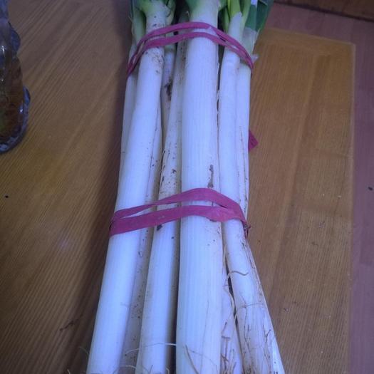 潍坊安丘市 山东大葱批发铁杆大葱新鲜包邮长葱生鲜蔬菜农产品去叶葱白