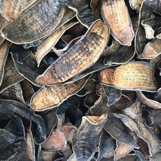 玉林玉州區 水蛭