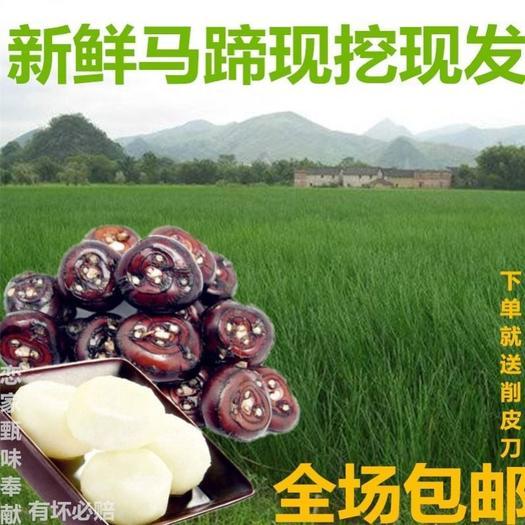 芜湖 现挖马蹄荸荠农家自产水果蔬菜地梨下单就送削皮刀