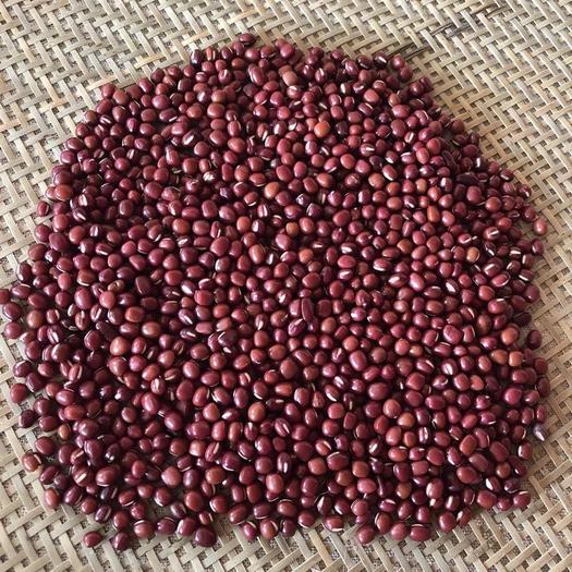 玉林玉州區 紅豆