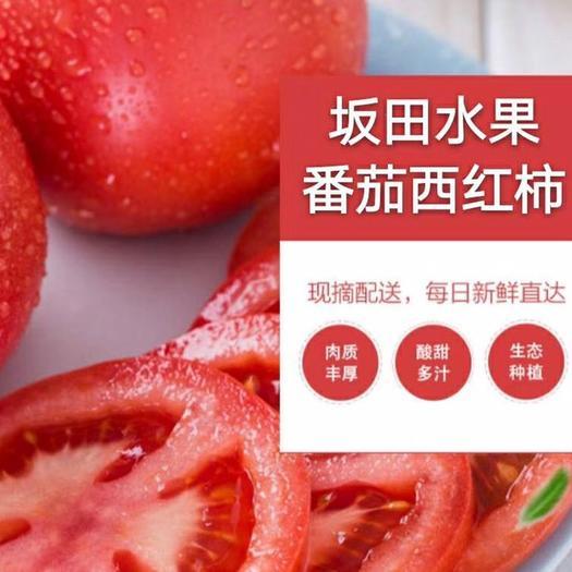 廊坊 日本坂田西紅柿,蜜蜂授粉,無農藥,自家園區種植。