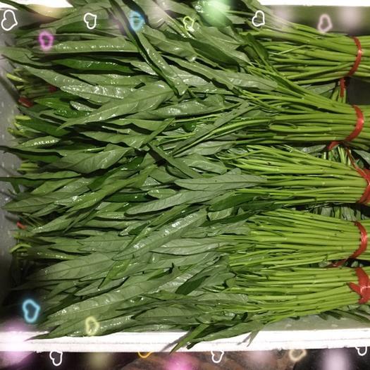 漳州龙海市竹叶空心菜 25 ~ 30cm