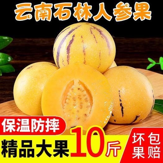 昆明 【特價包郵】云南石林人參果水果長果新鮮當季水果 批發包郵