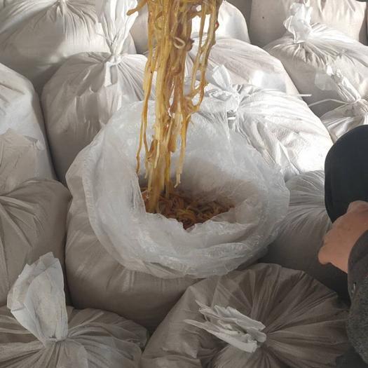 濮陽清豐縣黃金針菇 已開傘 干金針菇