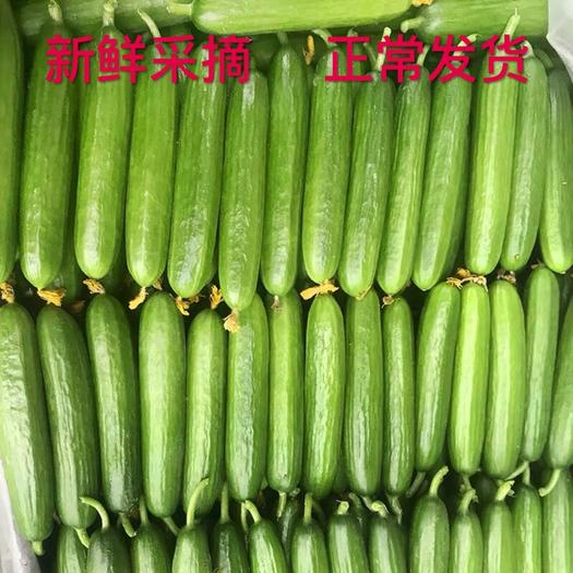 青岛平度市 新鲜水果小黄瓜   当天发货