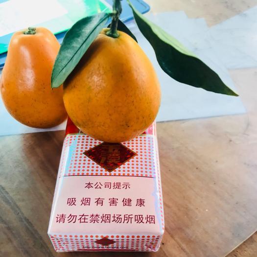柳州融安县 脆蜜金桔、滑皮金桔、脆皮金桔~各种苗木大量供应