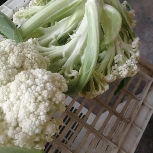 东台市 有机花菜 花菜