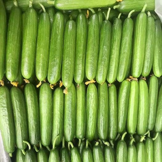 青岛平度市 产地直供  水嫩水果小黄瓜   亦果亦蔬 当天发货