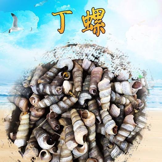 湛江霞山區海螺釘螺 供應鮮 活優質海鮮水產 螺絲海螺優質貝類海鮮 批發釘螺