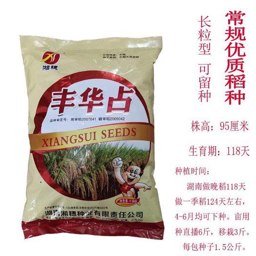 长沙长沙县丰华占谷种 丰华占 常规优质稻种 水稻高产种子