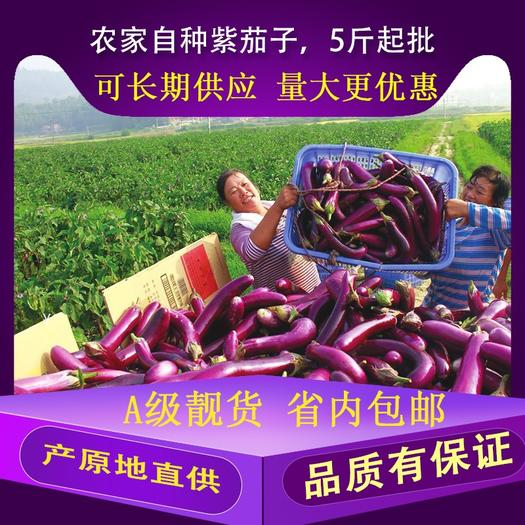 佛山 茄子紫新鲜农家自种产原地直供量大批发5斤起走快递或物流