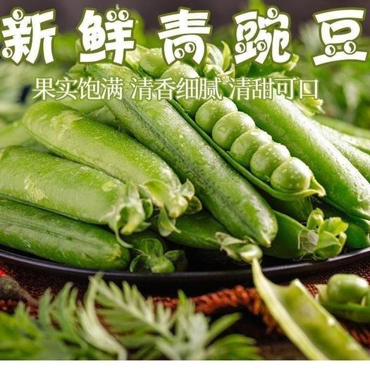 昆明 現貨云南時令新鮮蔬菜豌豆莢帶殼青豆荷蘭甜豆角整箱9 5 3斤