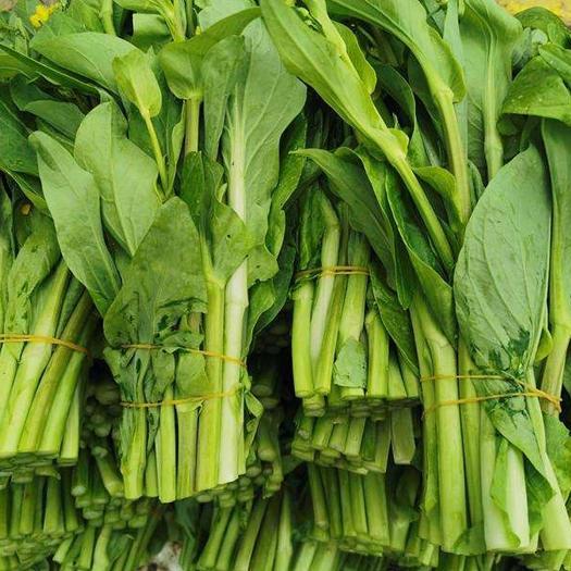 鶴峰縣白菜苔 恩施鶴峰地區富硒土種植的白菜胎大量供應