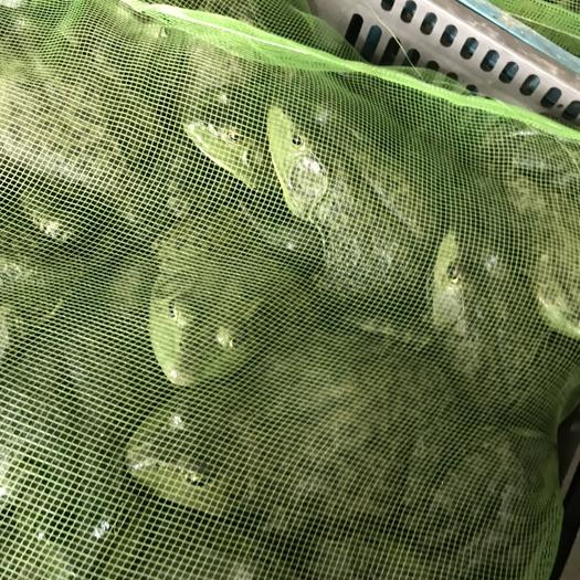 汕头澄海区 美蛙批发,大量上市,价钱美丽