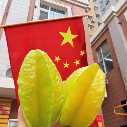 漳州漳浦縣 楊桃紅龍楊桃新鮮當季時令水果現摘現發3斤5斤包郵產地直發
