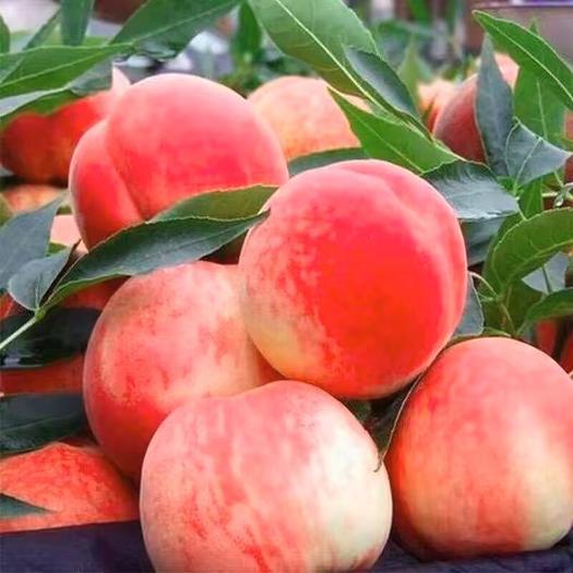 临沂平邑县水蜜桃苗 冬桃,黄桃,水蜜桃,白桃,基地直供,颗颗品种保证,基地批发。