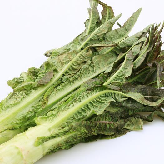 玉溪通海县 云南新鲜蔬菜新鲜紫叶莴笋莴苣一件代发包邮包售后