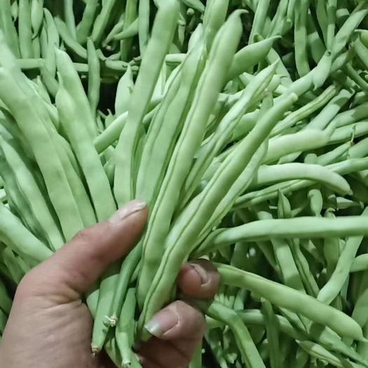 攀枝花盐边县 四季豆,均价三元多,这段时间差不多是0.8-4.7左右一斤