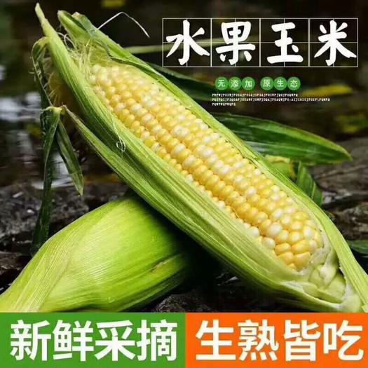 昆明 【现搬现发】云南水果玉米带箱10斤新鲜应季甜玉米棒生吃蔬菜包