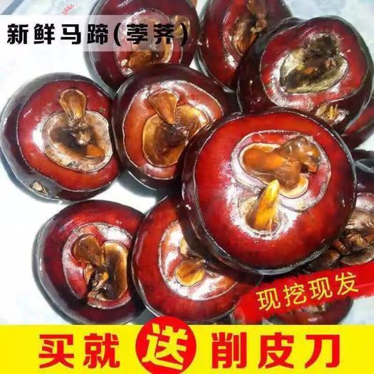 平乐县 孛荠马蹄荸荠地栗地梨5斤10斤水果蔬菜新鲜当季整箱即食