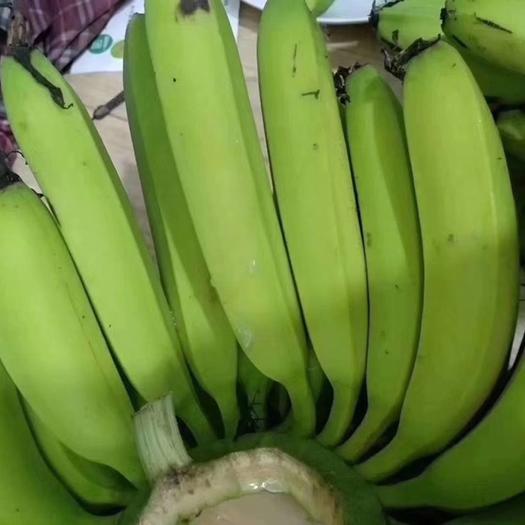 湛江雷州市 原产地香蕉 自家种植香蕉 代购代销