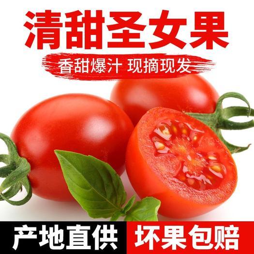 漳州东山县 【特价包邮】新鲜圣女果小番茄现摘现发当季新鲜水果多汁批发包邮
