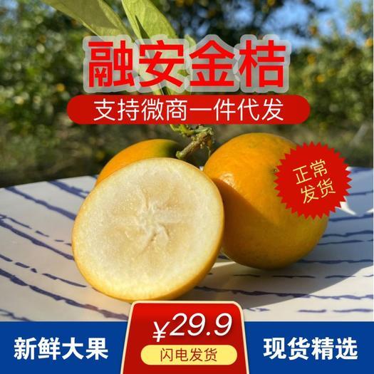 南宁上林县 【现在可以发货‼️支持一件代发】融安脆皮金桔5斤装大果包邮