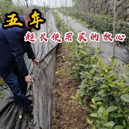 台州 防草布除草布耐用pe农用园艺果园果树遮光透气地布生态防草