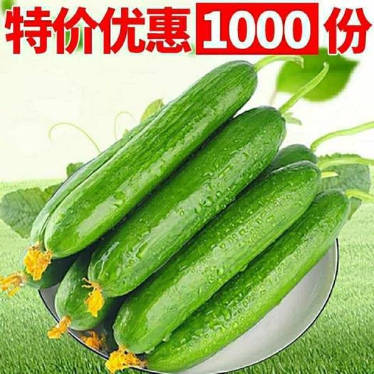 潍坊潍城区 【特价包邮】黄瓜现摘新鲜小黄瓜生吃小黄瓜水果小黄瓜批发包邮