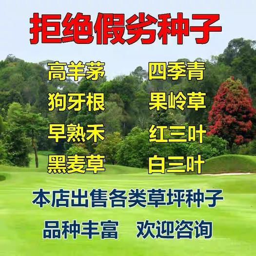 宿迁沭阳县早熟禾种子 早熟禾草种